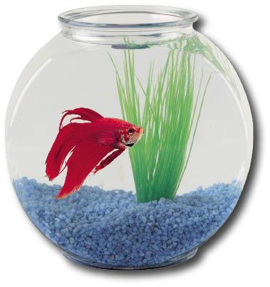 Акваріум ваш домашній підводний світ